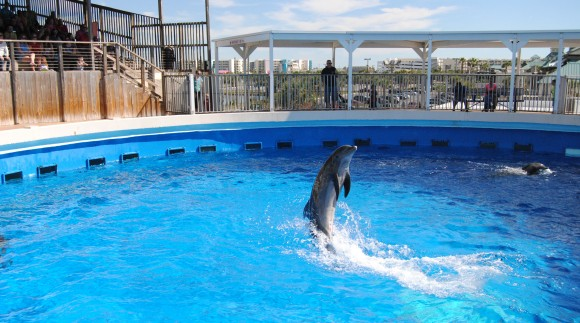 emerald coast dolphin show