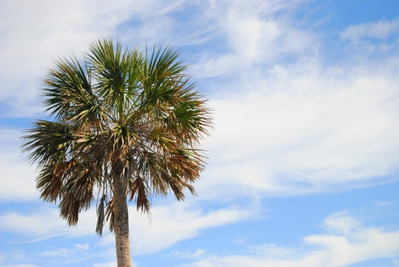 emerald coast palm tree