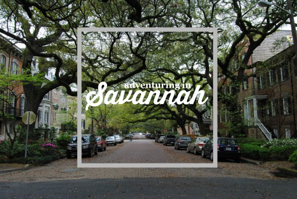Savannah button 1
