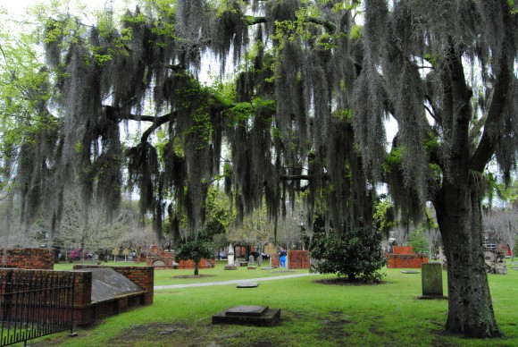 Savannah cemetery trees
